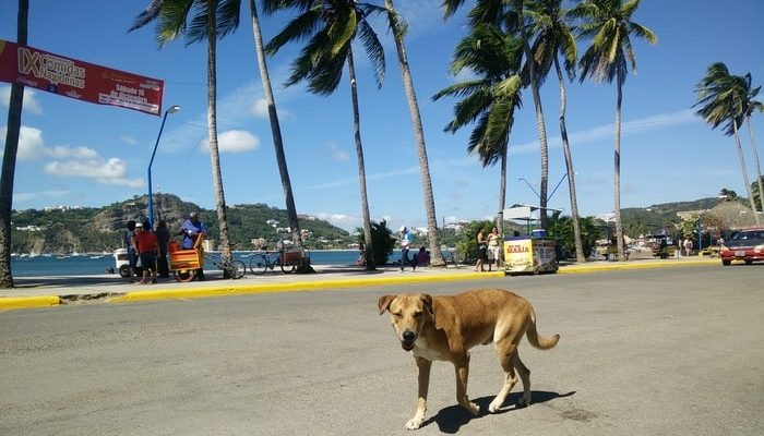 Stray animals in Nicaragua