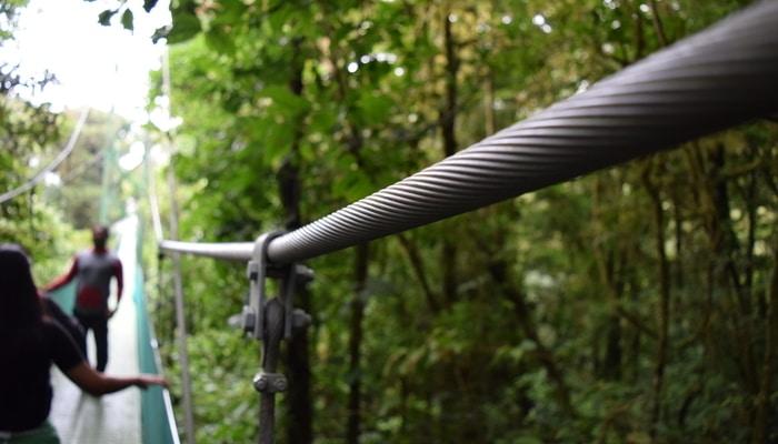 Hanging bridges in the rainforest