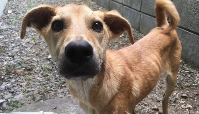 Bringing a dog to Costa Rica: Twiggy
