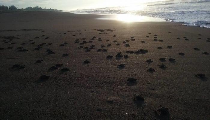 Guatemala beaches: A turtle-nesting paradise