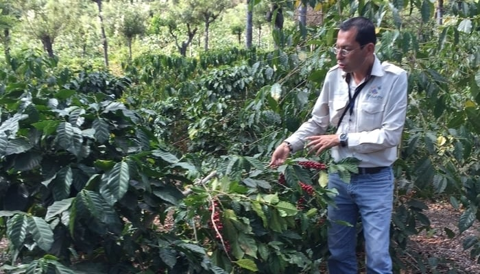Driving around Central America: Coffee tour