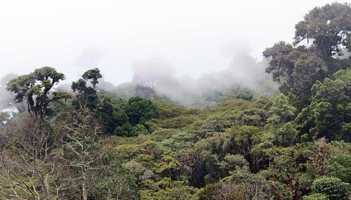 Michael Kaye eco-tourism
