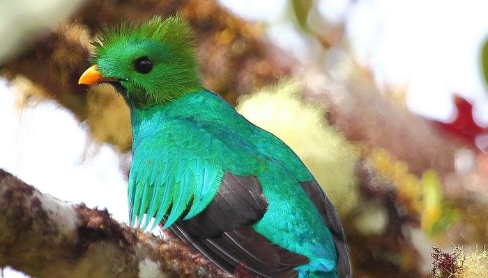 Banking in Guatemala / Quetzal / ryanacandee (Flickr)