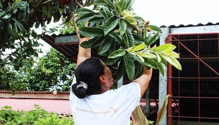 Costa Rica Coffee / Bean Voyage Facebook Page