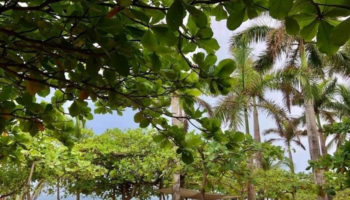 Costa Rica Beach Communities / Lola's Facebook Page