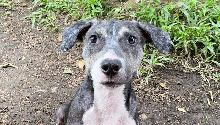 Bavaria Beer Costa Rica Dog Adoption Campaign / Photo credit to Fuerza Animalia Facebook Page
