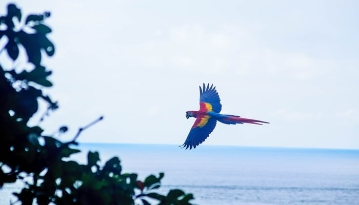 Tourism industry in Costa Rica / Photo by Dan Hadfield on Unsplash