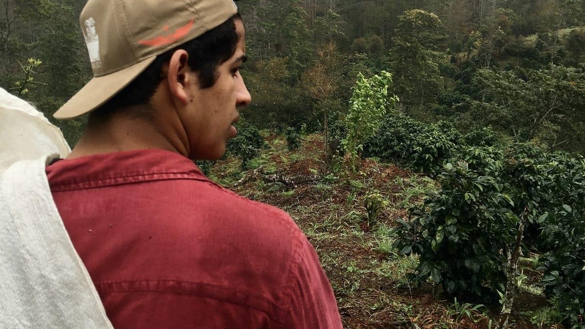 Best coffee in Honduras